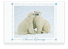 Polar Bear Greetings Cards
