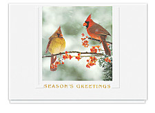 Winter Cardinals Seasons Greeting Cards