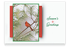 The Northern Cardinal Holiday Cards